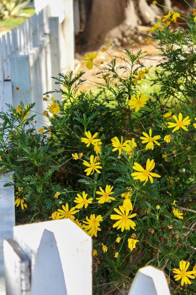 Website-Fence Garden